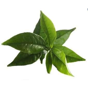 Le maté vert Bio - Herboristerie Parenthese Café