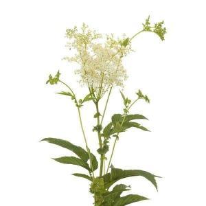 reine-des-pres-sommite-fleurie-bio