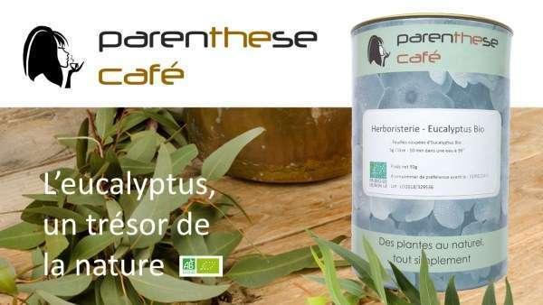 Herboristerie - Eucalyptus Bio Parenthese Café